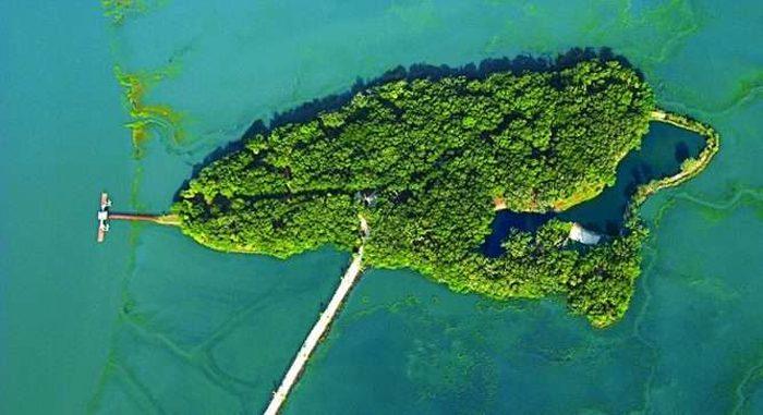 live-oaks-island-1