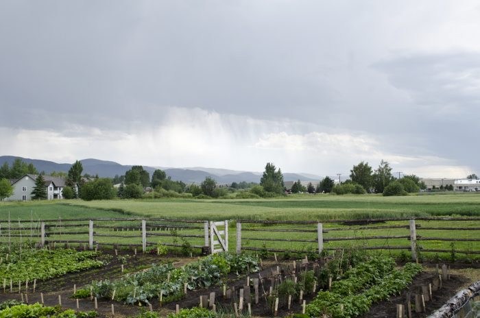 6. The  Tinsley Living Farm at the Museum of the Rockies is so beautiful.