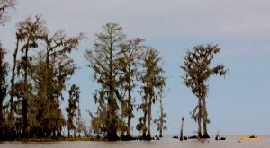 10 Unforgettable Tours Everyone In Louisiana Should Take At Least Once