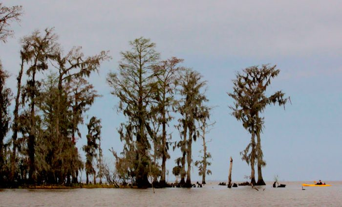 4) Louisiana Lost Lands Environmental Tours