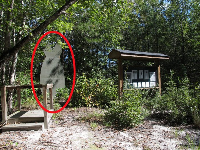7. The site of the B47 nuclear bomb that fell on SC in 1958 - Mars Bluff