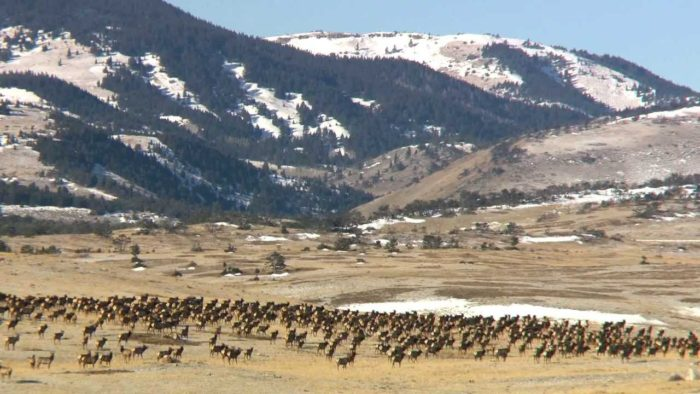 4. The Sun River Wildlife Management Area Scenic Byway