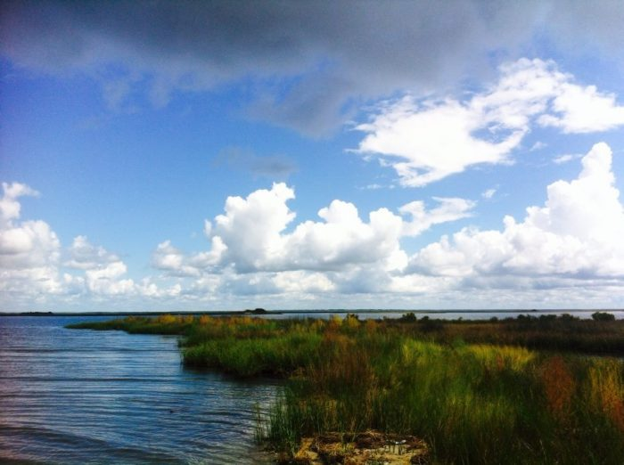 Between the reserve's  bayous, tidal creeks, and bays, there are plenty of places to canoe and kayak within the area.