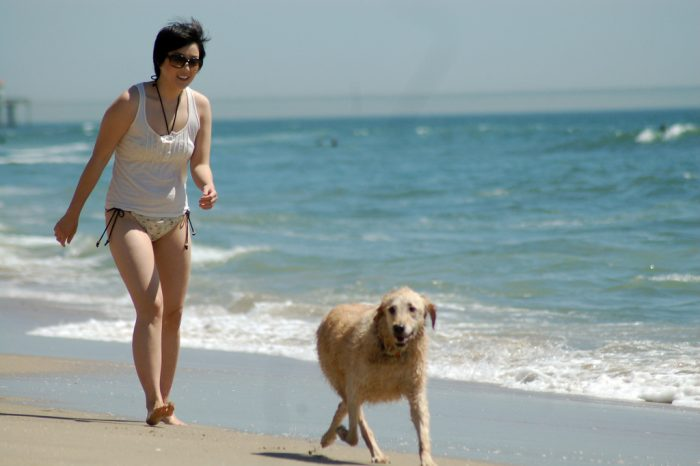 8. No dogs are allowed on the beach during the summer or the owner will be arrested.
