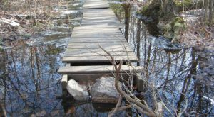 10 Trails In Rhode Island You Must Take If You Love The Outdoors