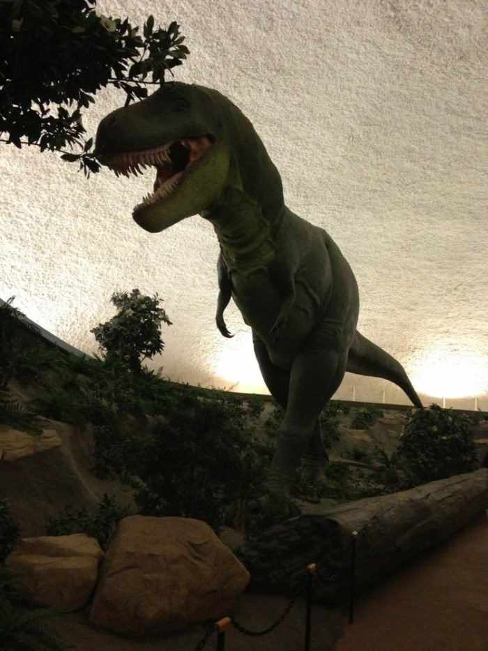 1. Begin your day by digging for fossils and making prehistoric friends at the Sternberg.