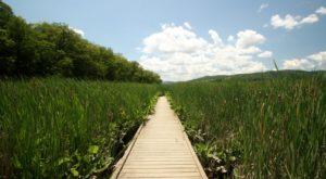 1. Constitution Marsh Audubon Center and Sanctuary, Garrison