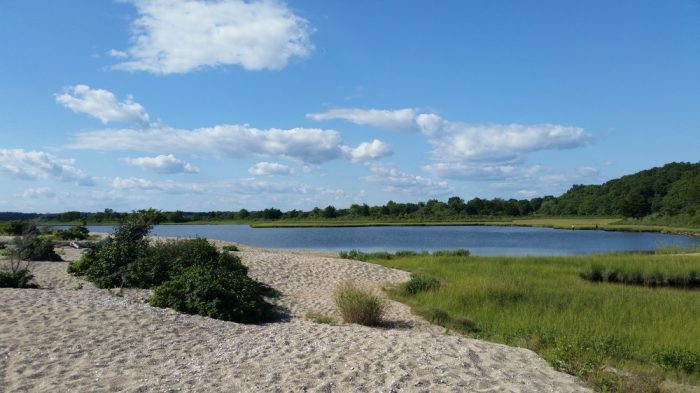 For instance, the lush tree walk later transitions into wetlands and then into this gorgeous marsh area. With 800 acres of land to explore, there is no shortage of sights here.
