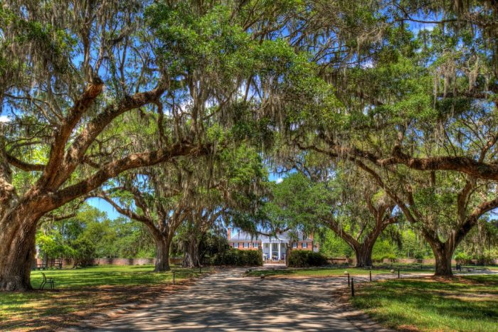 15. The old oak trees have grown so big that even the giant old plantation homes seem overshadowed by their majesty.