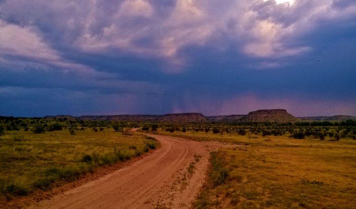 Over 18 tons of camptosaurus, stegosaurus, brontosaurus, diplodocus, and edmontosaurus bones have been quarried at Black Mesa.
