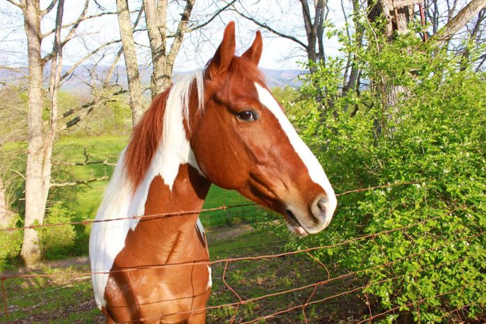 There are several horses on the farm, including Pegasus, after whom the farm was named.