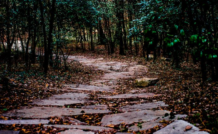 A stone-lined path leads you away from the top of the hill and towards the various bayous that surround the woods.