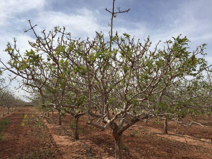 7. Tour a pistachio farm