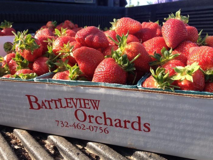 11. Strawberry Picking at Battleview Orchards, Freehold
