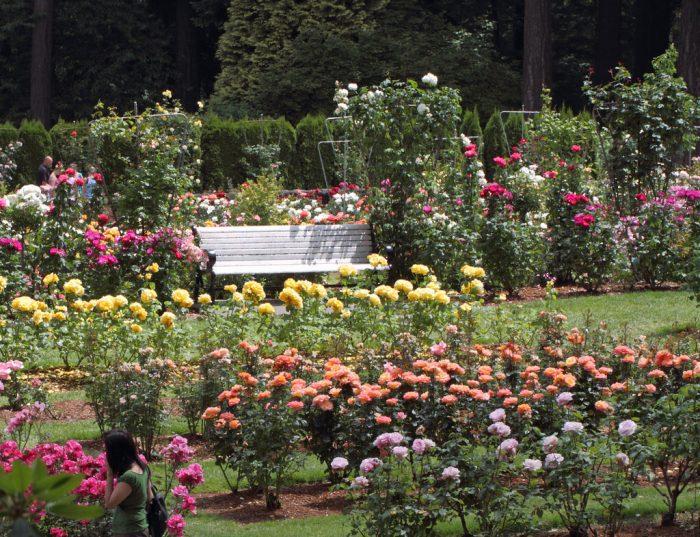 4. International Rose Test Garden