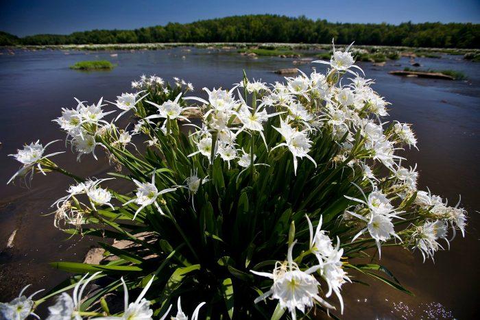 6. Pledge to visit some of South Carolina's 47 wonderful state parks.