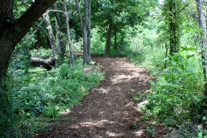 The winding trails along this sliver of nature will make you feel like you're deep in the woods right away.