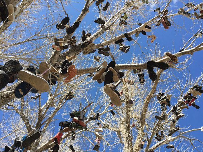 1.The New Shoe Tree – Middlegate