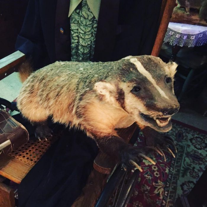 During your guided tour, which will last approximately 45 minutes, you'll come face-to-face with taxidermied animals....