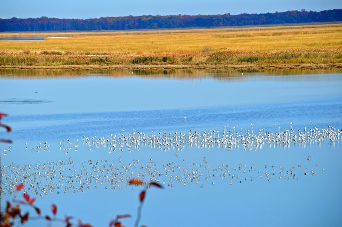 Birds rest in the marshland that becomes their breeding grounds.