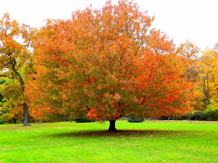 3. Autumn trees are like the attractive high school jock before his hair falls out.