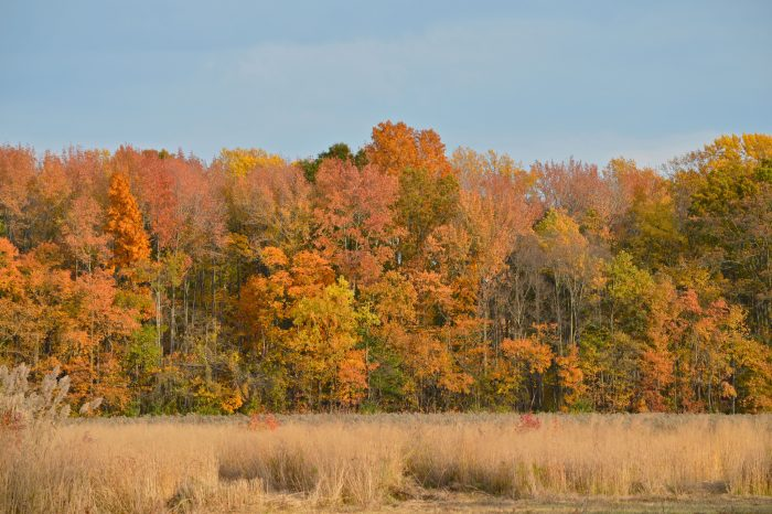 Fall foliage makes Bombay Hook look even more incredible - if that's possible.