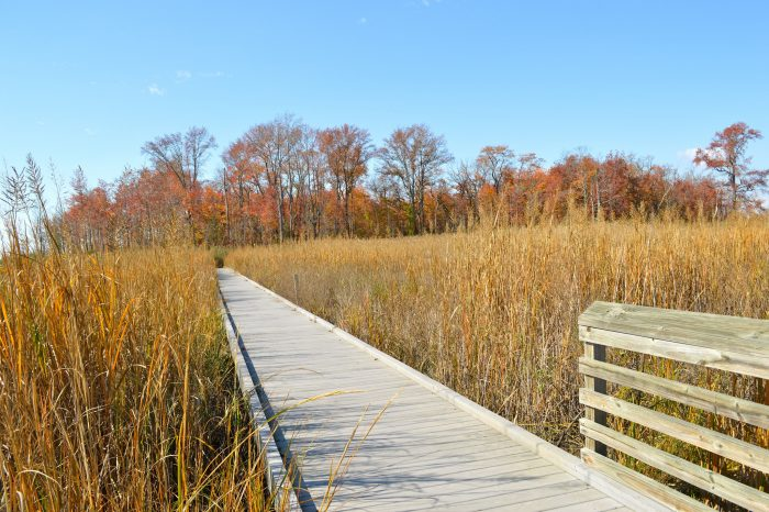 Some of the walking trails have boardwalks to travel, taking you above the marsh.