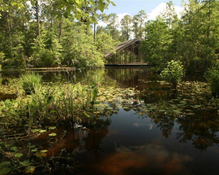 3) North Savanna Trail, Crosby Arboretum