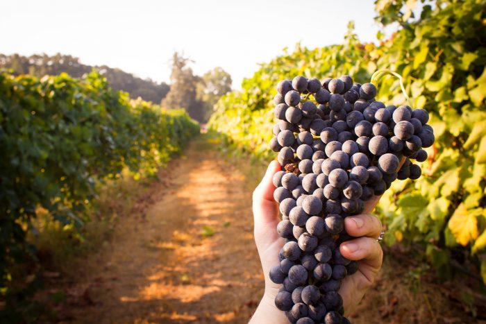 3) Landry's Vineyards, West Monroe, LA