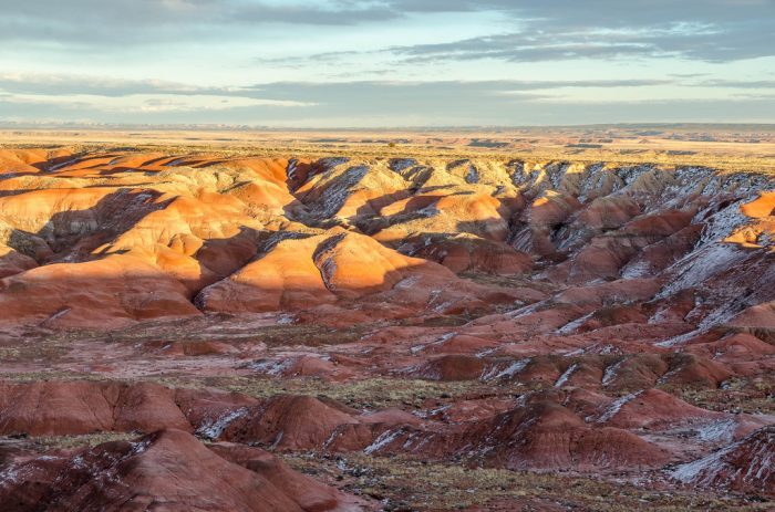 11. Petrified Forest