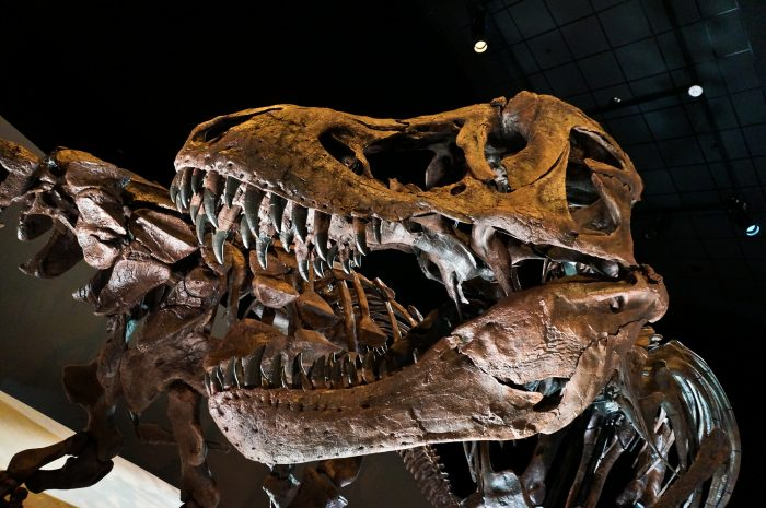 9. Museum of Natural Science (Houston)