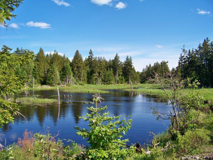 7. Moosehorn National Wildlife Refuge, Baring Plantation