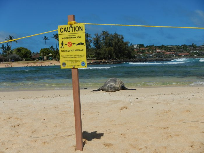 12. Touching monk seals, honu, or other threatened species.