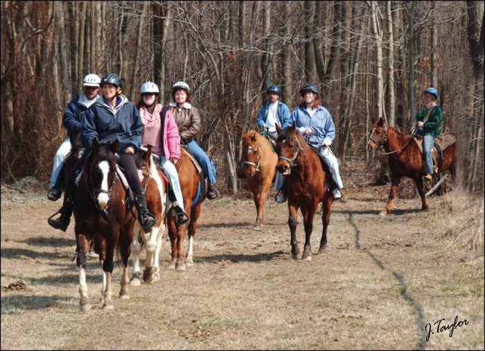 6. Hit the trails with Sunset Stables.