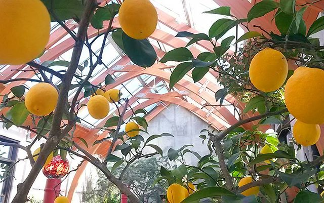 Be sure to wander through the Orangerie, a tropical oasis filled with ripe citrus and blooming bulbs. It's the perfect antidote to the winter blues.