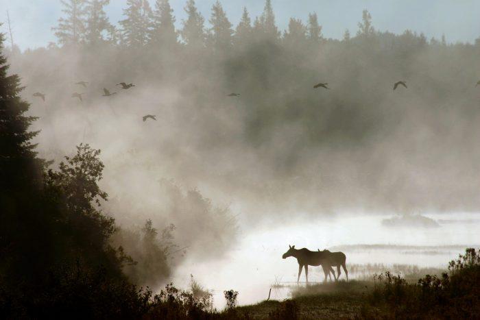 2. Aroostook National Wildlife Refuge, Caribou