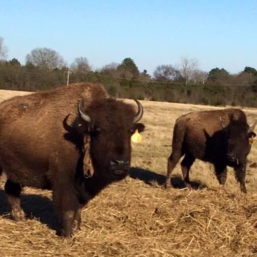 2. Tupelo Buffalo Park and Zoo