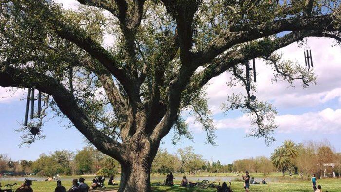 6) Singing Oak, City Park