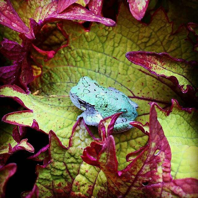 The gardens are also filled with rare and unusual creatures, such as this grey tree frog.