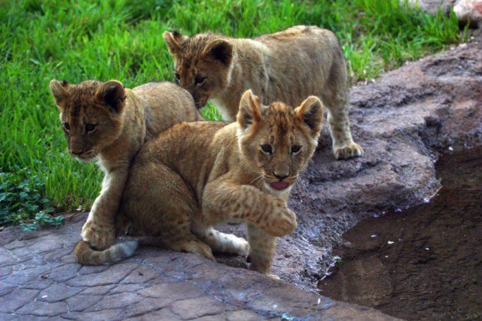 2. Hogle Zoo
