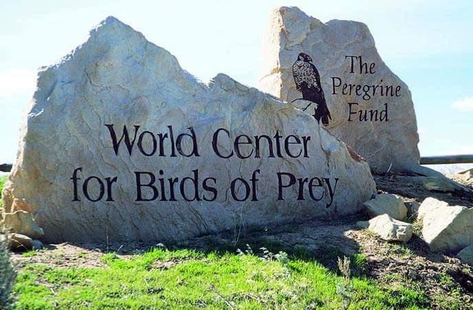 4. World Center For Birds Of Prey