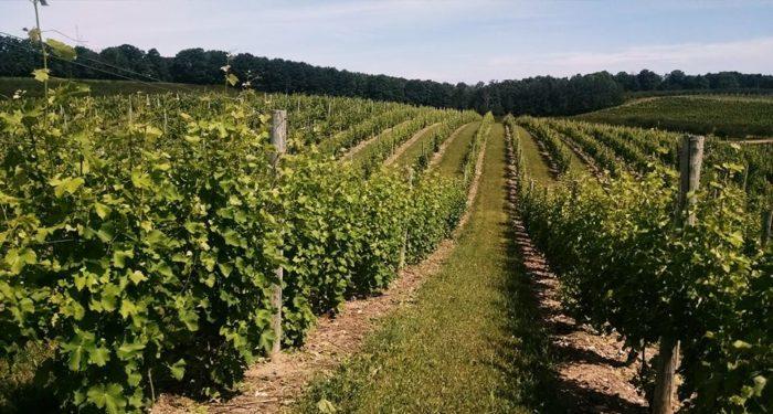 3. Laurentide Winery (56 S French Rd, Lake Leelanau)