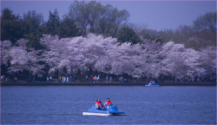 3. Paddle Boat on the tidal basin