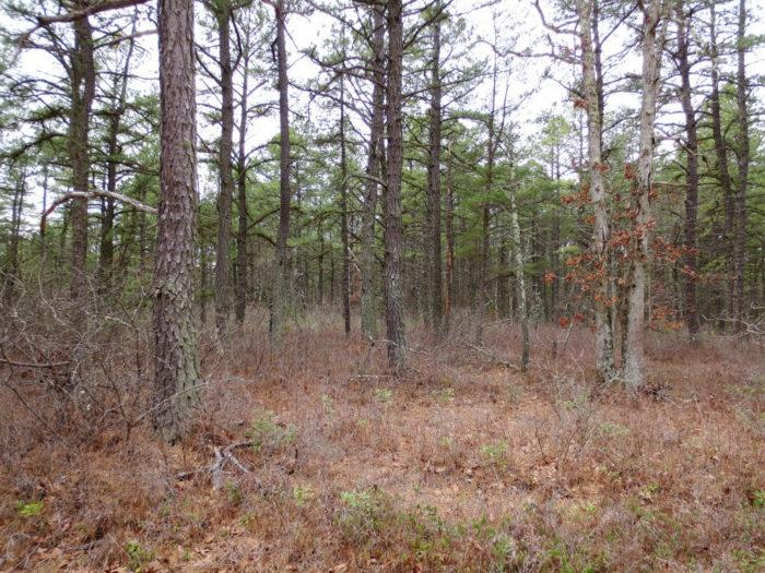 3. Pine Barrens, New Jersey
