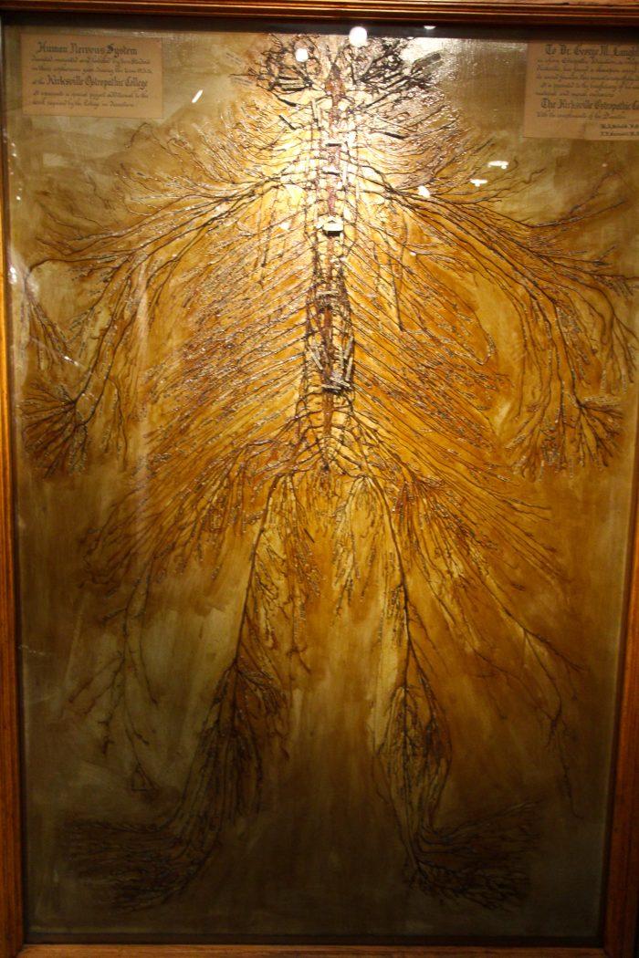 14. Human Nervous System – Kirksville, Mo.