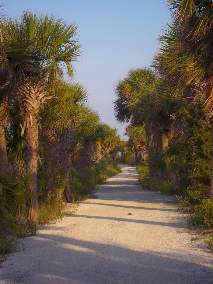 11. McQueen's Island Trail—Savannah, GA