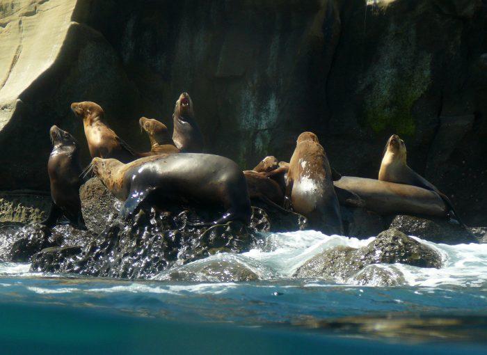 6. The Sea Lions at La Jolla Cove