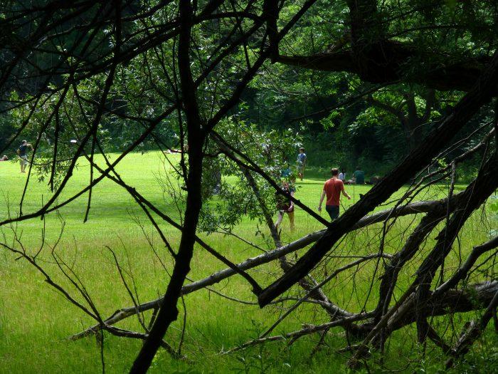 6. Nichols Arboretum