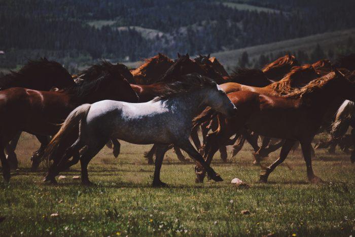 2. Wild Horse Tour