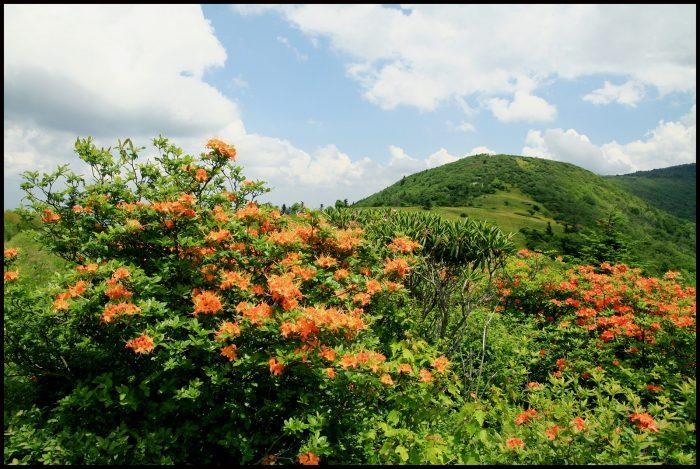 3. Roan Mountain